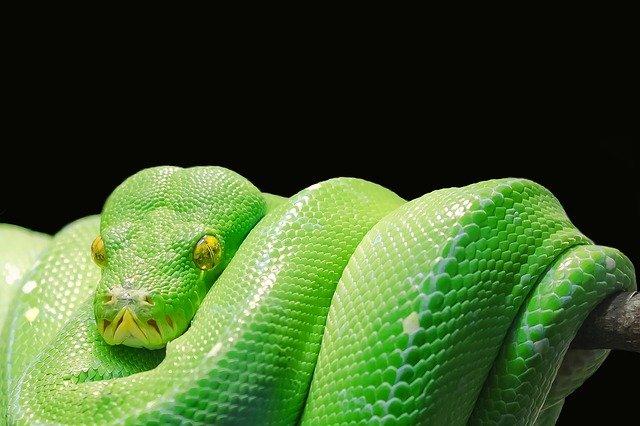 zelený had