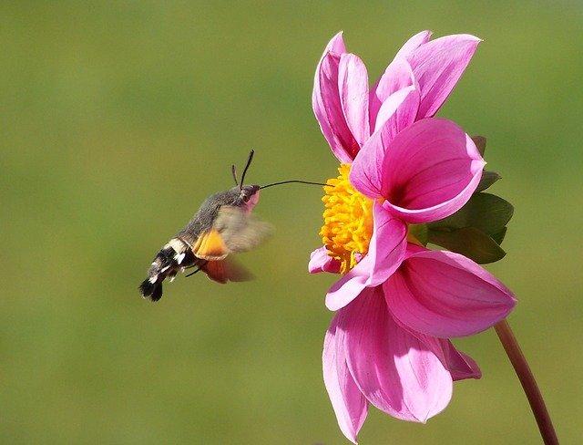 kolibřík u květiny