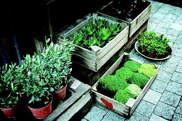 rostlin na trhu