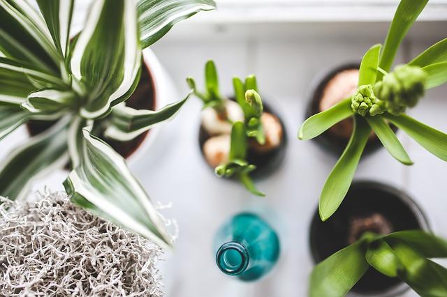 zelené pokojové rostliny