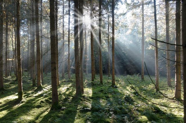 paprsk slunce v lese