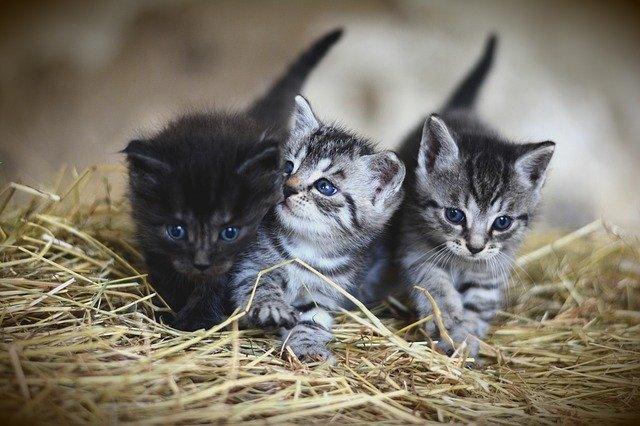 koťátka na slámě