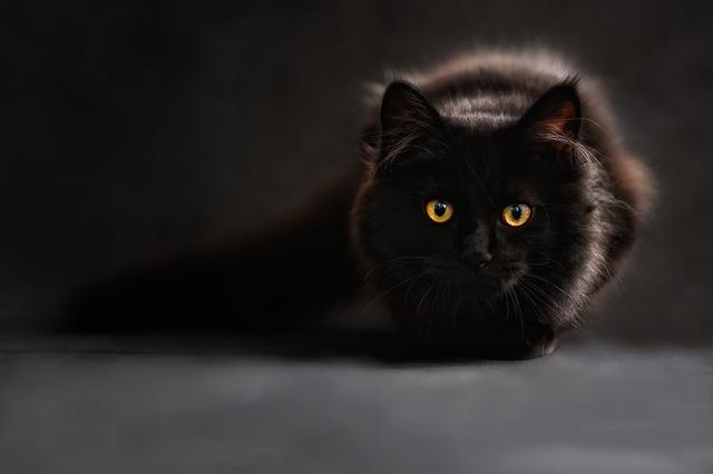přikrčená kočka