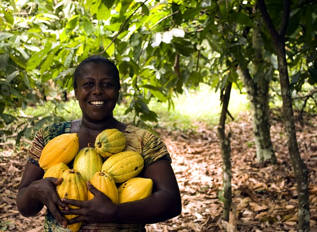 žena nese lusky s kakaovými boby